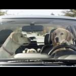 Subaru investe em propaganda com cachorro novamente